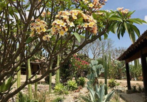 Spring at Rancho Pitaya