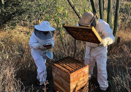 Mary Jane and Modesto harvesting honey